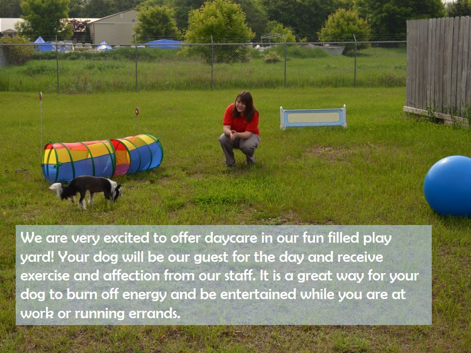 A team member playing with a dog outside with the grass with toys