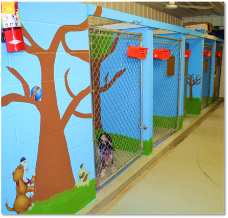 Some of the dog kennels in the boarding facility